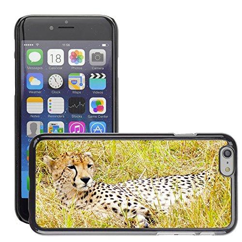 "Bild Hart Handy Schwarz Schutz Case Cover Schale Etui // M00133428 Gepard Großkatze Raub Feline // Apple iPhone 6 PLUS 5.5"""