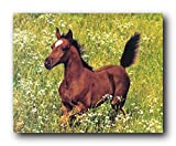 Arabian Horse Wall Decor Running Foal Farm Animal Art Print Poster (16x20)