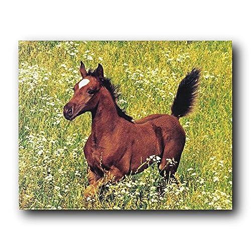 Home Decor Running Horse: Amazon.com