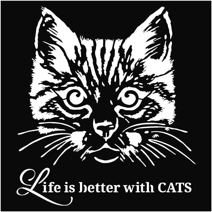 Stamperia Life is Better with Cats - Plantilla para estarcir (18 x 18 cm), diseño de Gatos: Amazon.es: Hogar