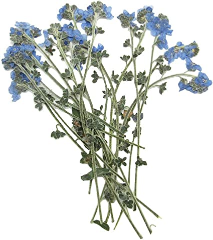 Amazon Com 20 Pcs Natural Dried Flowers Real Forget Me Not Pressed Leaves For Resin Art Craft Diy Jewelry Floral Decors