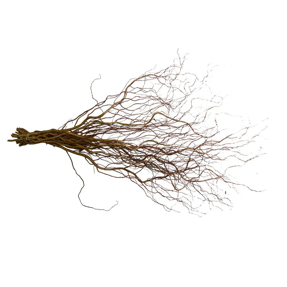 6 frische Korkenzieherweide-Zweige ca. 80 cm lang | echte Weidezweige fü r Bodenvasen | Naturholzä ste zur Dekoration Dekozweig