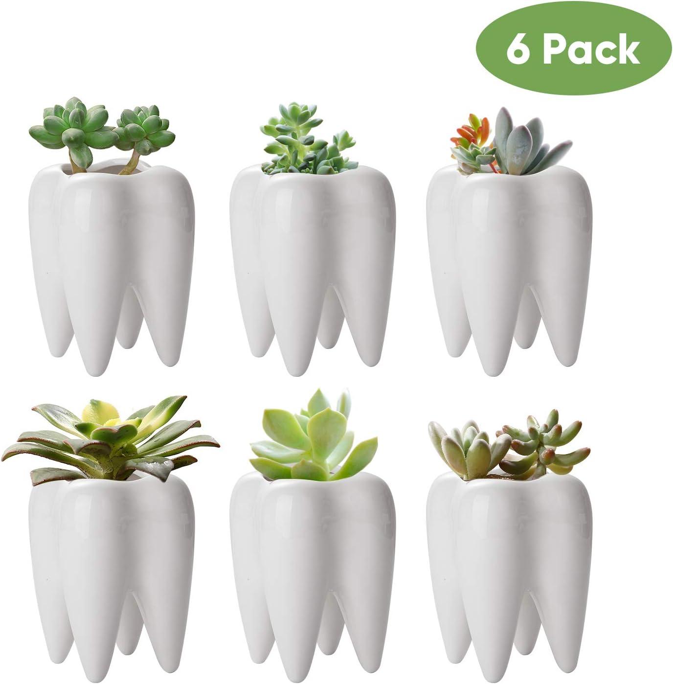 Tooth Shaped Planter Pots,Small Ceramic Succulent Pots,Cute White Cactus Planters,Mini Flower Plant Containers, Creative Pen Pencil Holder for Desk Decor 6 Pack