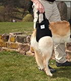 Pfaff Medical Dog Rear Carrier Lifting Harness Dog Lifting Aid (Extra Large)