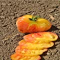 Tomato Garden Seeds - Hilbilly - Non-GMO, Organic, Heirloom, Vegetable Gardening Seed