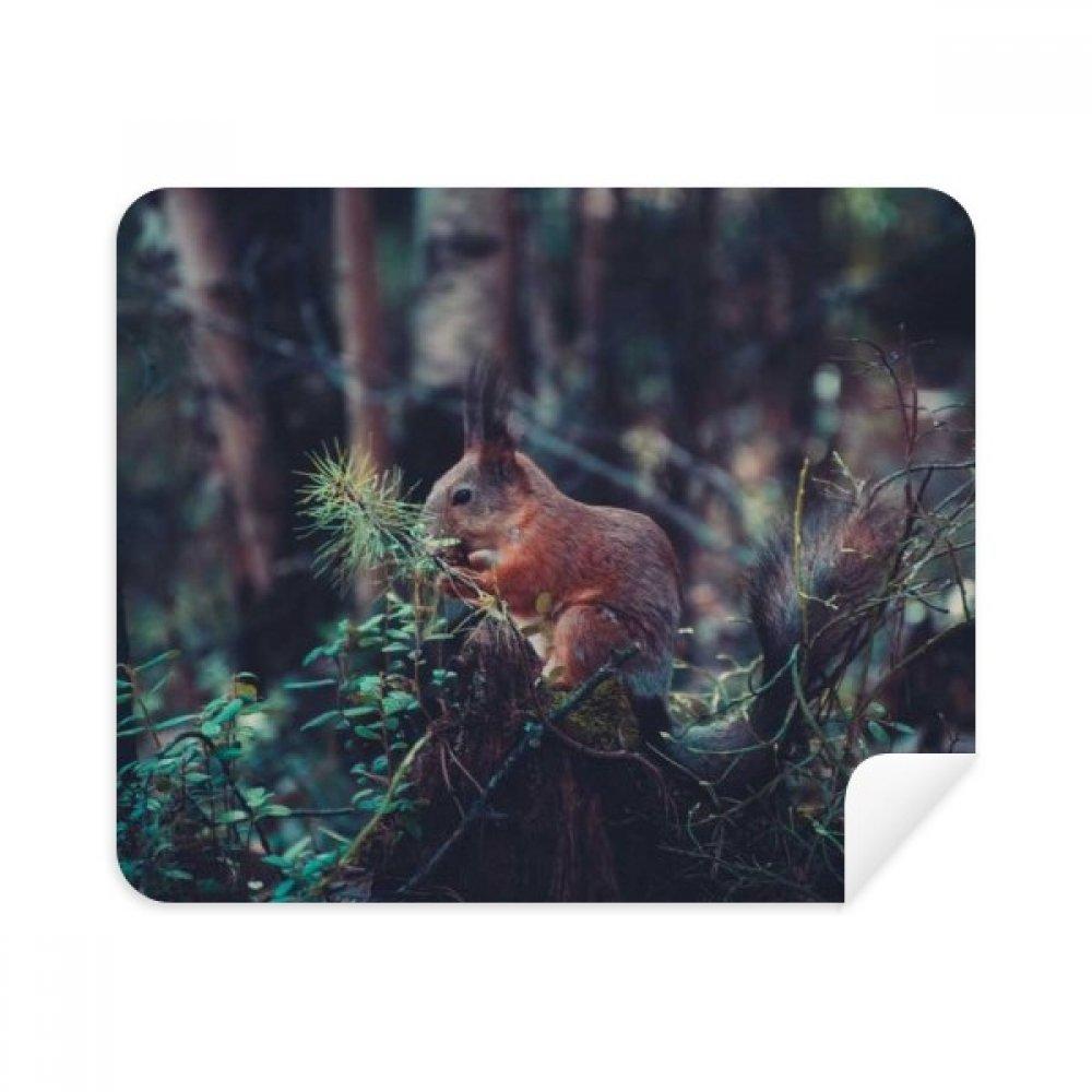 Cute Squirrel Forestry Science Nature Scenery電話画面クリーナーメガネクリーニングクロス2pcsスエードファブリック   B07C9479KJ