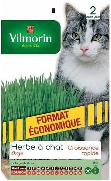 Vilmorin - Paquete Semillas Hierbas Gato: Amazon.es: Jardín