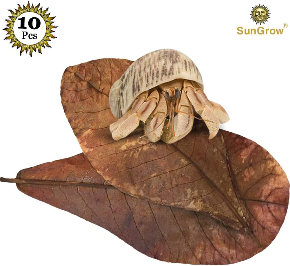 SunGrow Hermit Crab Leaves, Dried Leaves for Added Humidity, Delicious Crab Treat and Source of Cellulose