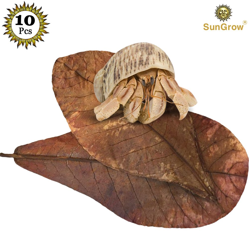 10 Natural Hermit Crab Leaves to Decorate your pet's home Add colour to your pet's home with SunGrow leaves Ensures optimum health and provides right humidity levels