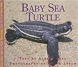 Baby Sea Turtle, Aubrey Lang, 1550417460