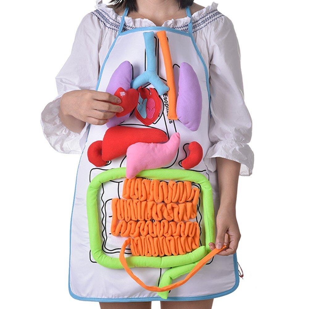 Per Organes Corps Humain Tablier Corps en Peluche 3D Corps Humain Jeu Tablier Enfant pour Peinture Manger Cuisine Tablier Éducatif