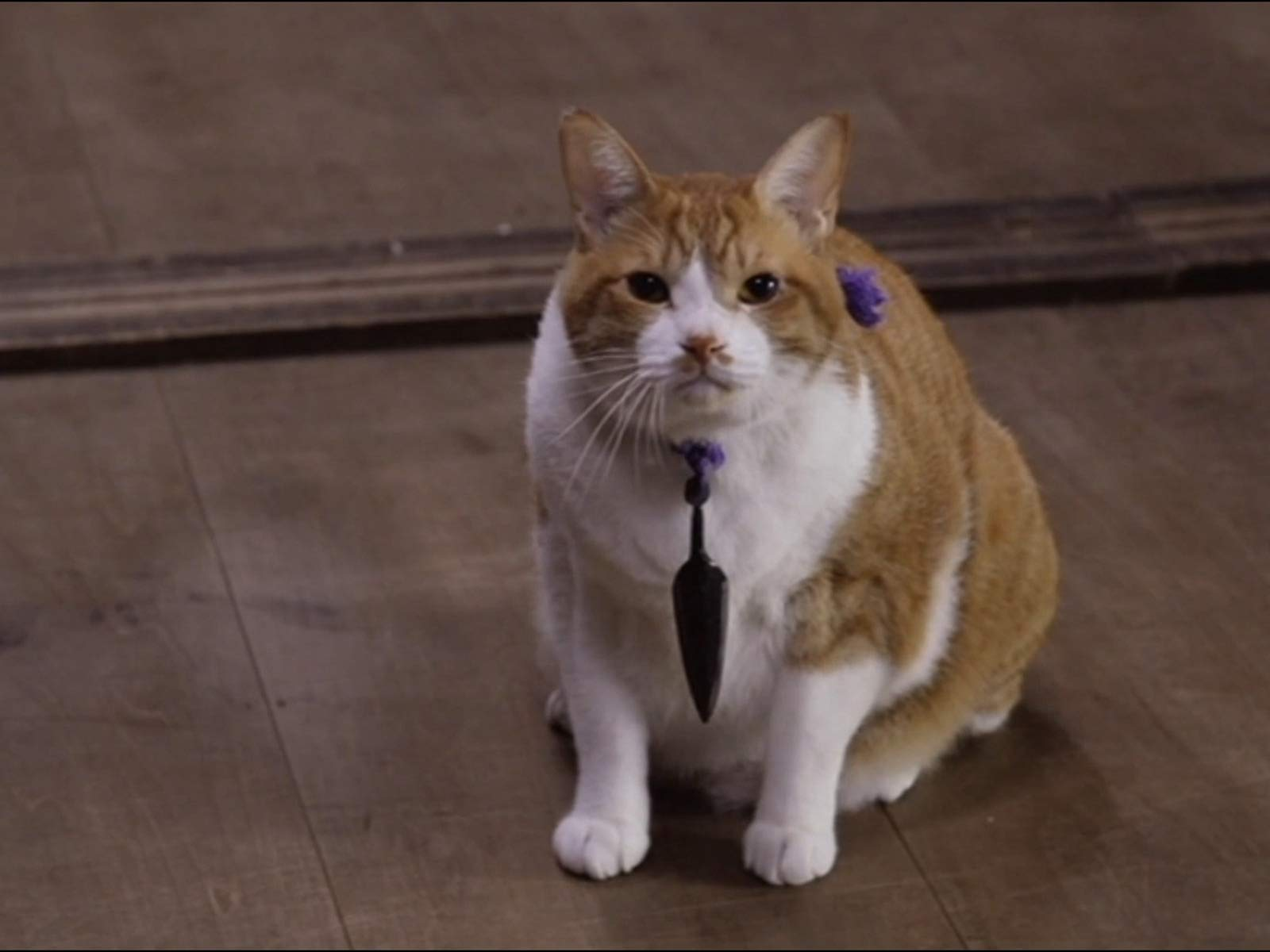 Amazon.com: Ninja Cat, Season 1