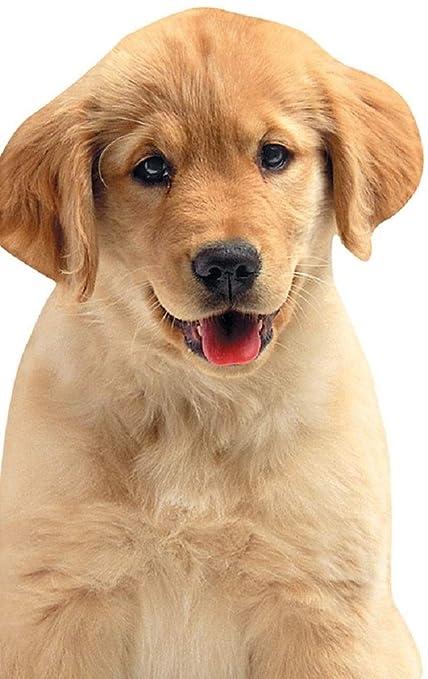 Amazon Com Playhouse Golden Retriever Puppy Die Cut Shaped Pocket