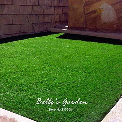 Semillas de 1000pcs Jardín cubierta de tierra hierba verde Fuente Césped Césped Evergreen Lawn ornamento planta Patio # Y10: Amazon.es: Jardín