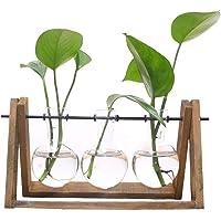 SODIAL Terrario de Planta con Soporte de Vaso