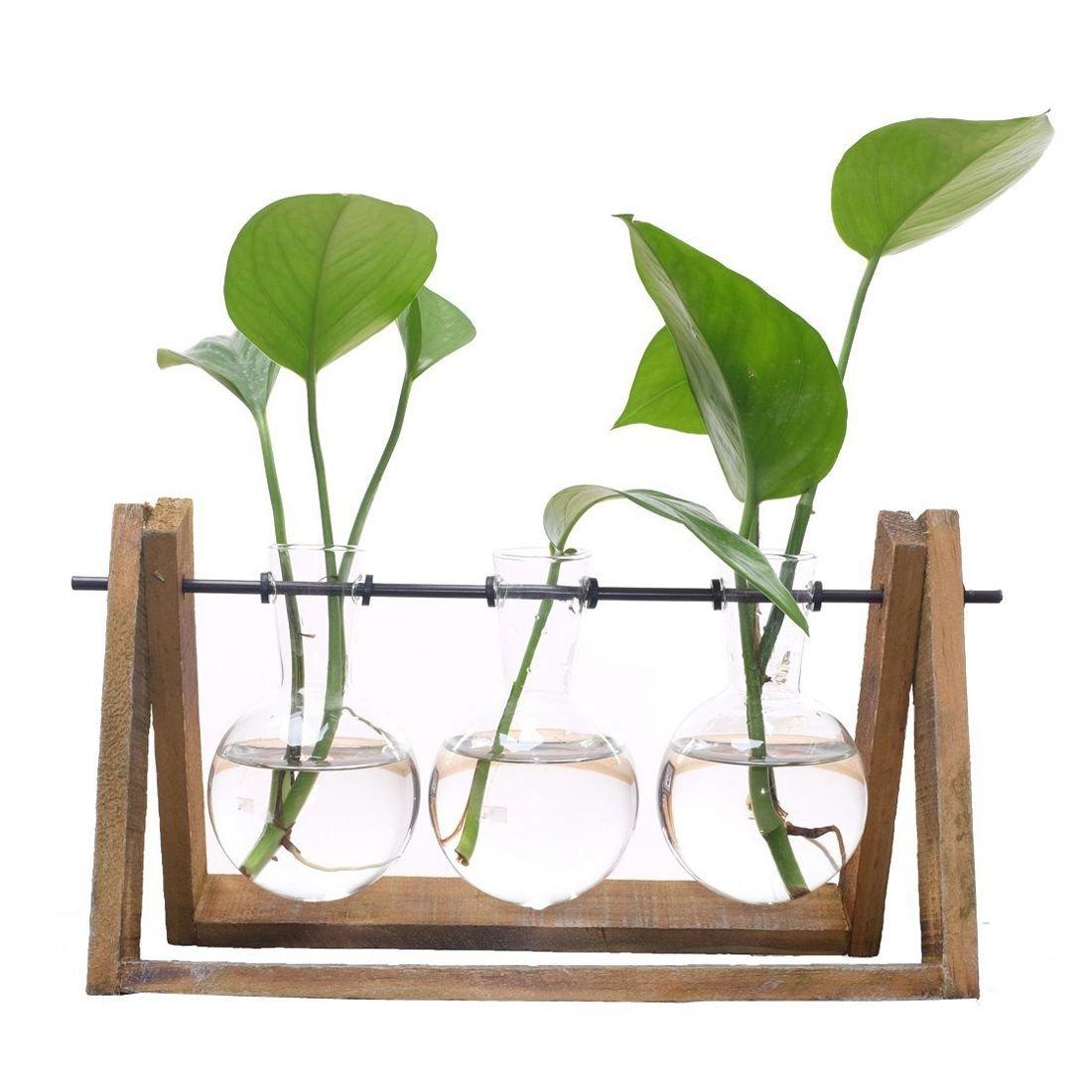 SODIAL Terrario vegetale con supporto per vaso di vetro in legno per decorazione domestica, contenitore Scindapsus (3 terrari)