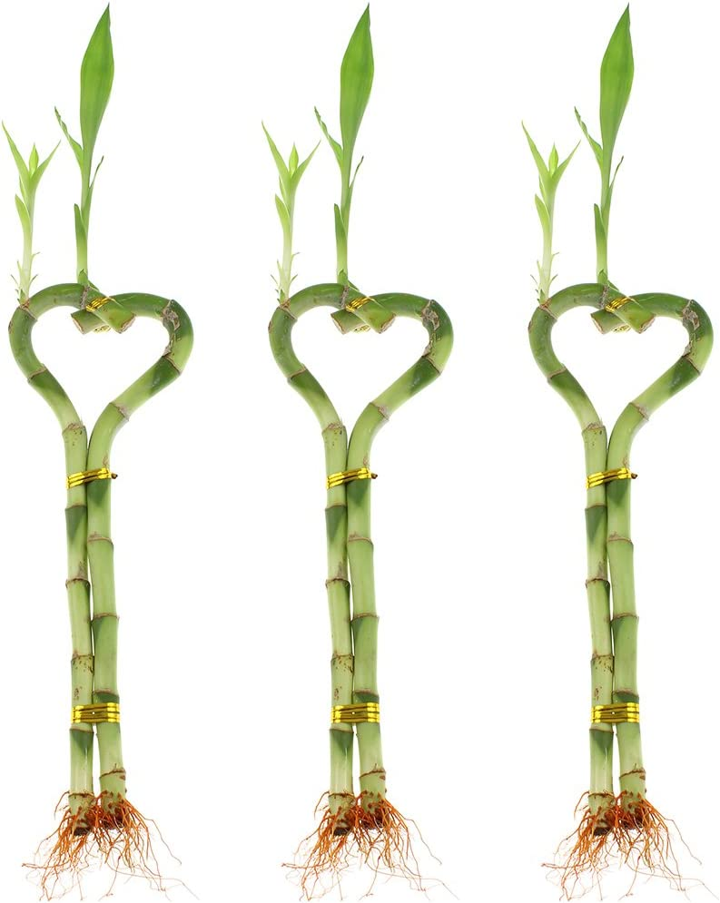 One Price NW Wholesaler Pair of 2-Tier /& 3-Tier Towers Lucky Bamboo