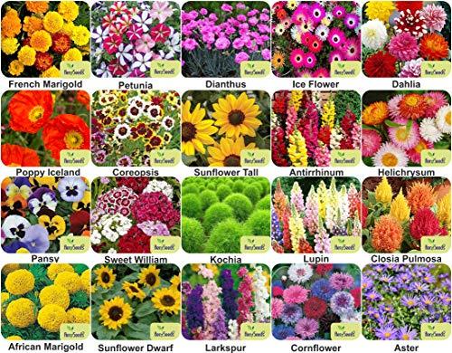 Aero Seeds Combo Of 640+ Seeds 20 Varieties of Flower Seeds For Your Garden Beautiful Bloom Germination Seeds