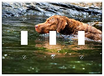 Switch Plate Triple Toggle Dog Chesapeake Bay Retriever Pets Amazon Com