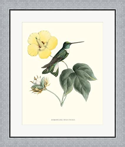 Amazon.com: Hummingbird & Bloom I by Mulsant & Verreaux Framed Art ...