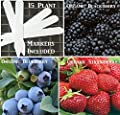 Organic 3 Fruit Seeds Combo Pack (Organic) 375+ Seeds UPC 646263363003 Self Fertile + 15 Free Plant Markers Blackberry Strawberry Blueberry - Stocking Stuffers