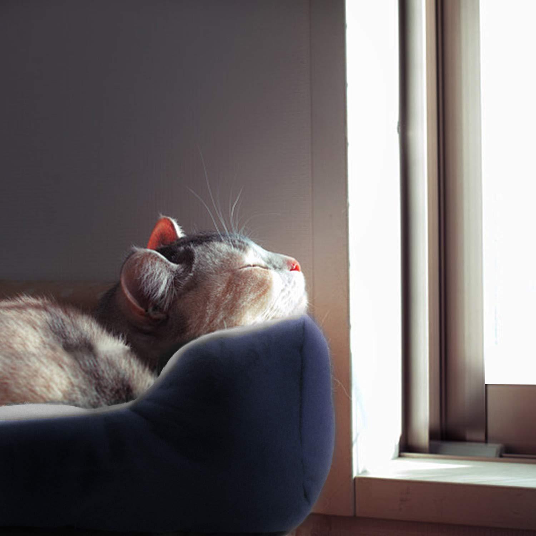 猫 Ipad壁紙 ワンちゃん ネコちゃん におすすめの 通年タイプの