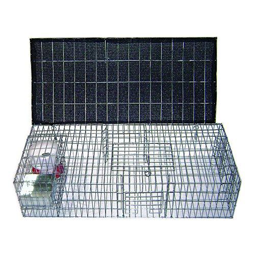 Pigeon Trap - 2