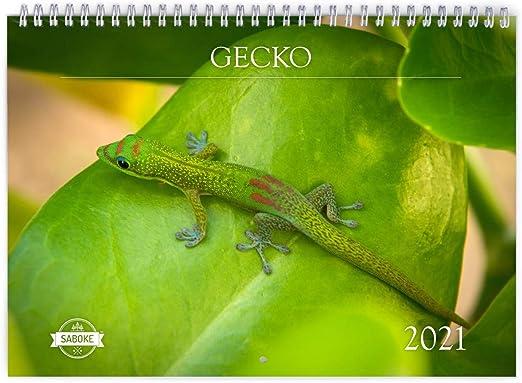 Amazon Com Gecko 2021 Wall Calendar Office Products