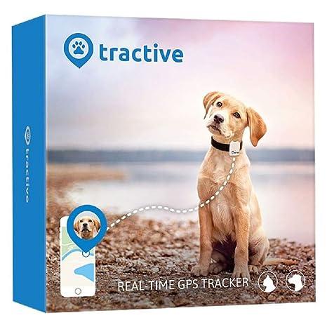 Rastreador GPS para mascotas para gatos y perros: Amazon.es ...