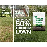 Scotts Turf Builder Thick'R Lawn Sun and