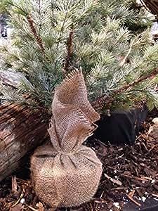 Yuzet Medio 50cm x 80cm Yute Arpillera árbol de Navidad De La Planta Bolsa Navidad Soporte Real En Vivo