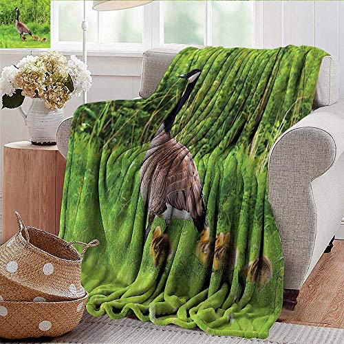 Canadian Geese Blanket - Xaviera Doherty Outdoor Blanket Geese,Canadian Chicks on The Grass Microfiber All Season Blanket for Bed or Couch Multicolor 70