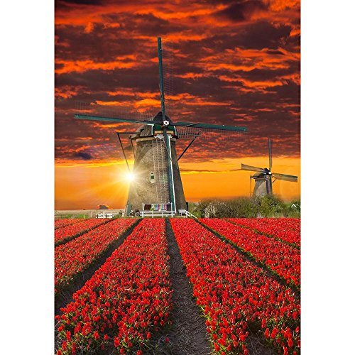 utiful Tulip Field Holland Unframed Canvas Painting 20 x 28.8inch ()
