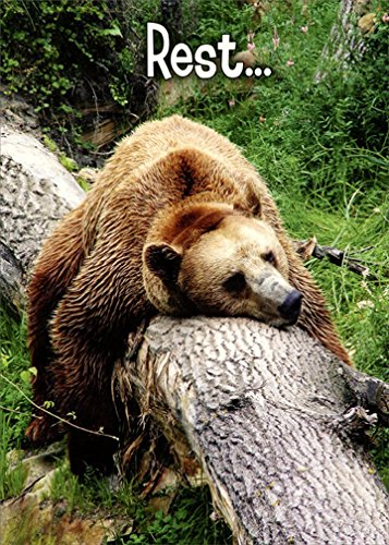 - Grizzly Sleeping on Tree Trunk - Oatmeal Studios Funny Get Well Card