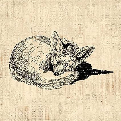 Vintage Sleeping Fox Wall Art Print Cute Animal Artwork Home Decor Antique With