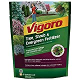 buy 3.5 lb. Tree, Shrub and Evergreen Plant Food-Vigoro-124260 (1 Pack) now, new 2019-2018 bestseller, review and Photo, best price