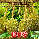 NEW Sale 20pcs A Lot Delicious Durian Seeds King Of Tropical Fruit Trees Seed Giant GARDEN Plants Bonsai Tree Sementes . Dark Gray
