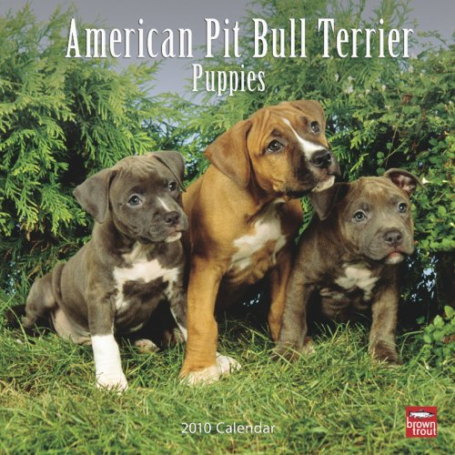 American Pit Bull Terrier Puppies 2010 Square Wall