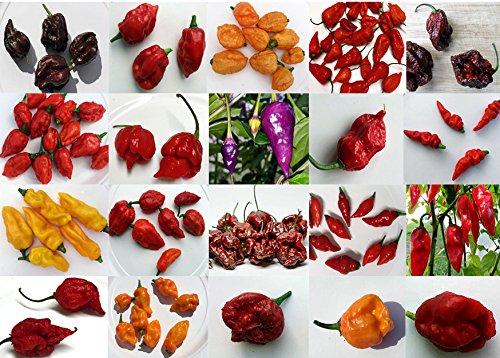 Harley Seeds 15+ World Hottest Pepper Mix Seeds 26 Varieties Organically Grown Super HOT from USA Trinidad Scorpion Carolina Reaper King Naga Bhut Jolokia 7 Pot