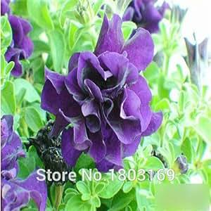 200PCS Petunia pétalos de flores de petunia Semillas semillas de flores de color 20