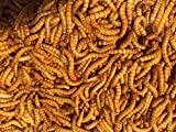 "Bulk Live Mealworms - 500 count (Medium - 0.5"")"