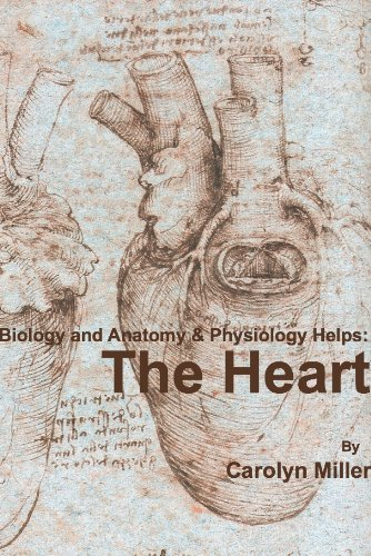 Biology And Anatomy Physiology Helps The Heart Biology And