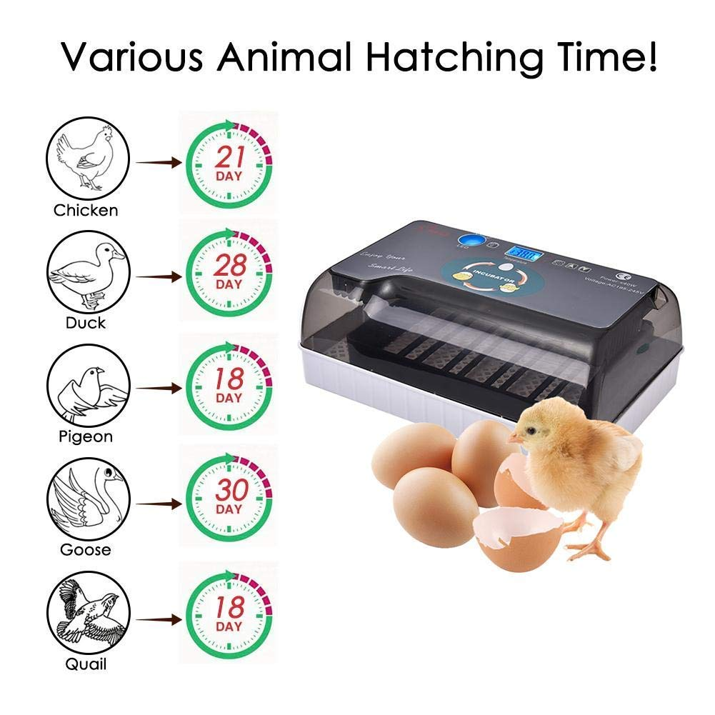 Incubator,Automatic Egg Turning Function,for Eggs Fire Eggs Etc Home Use Chidi Toy 2019 new egg incubator incubator for eggs automatic,incubator for eggs Duck Eggs