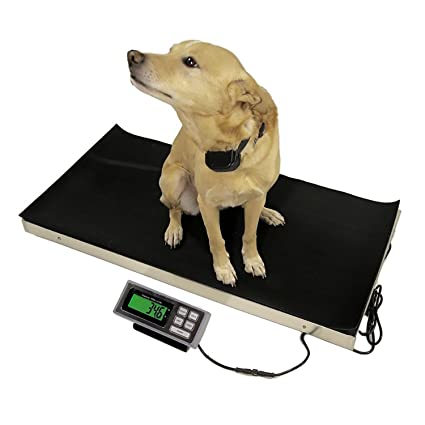 Amazon.com: 700 LB x 0.2 LB 38 x 20 Inch Platform Vet Veterinary Animal Livestock Dog Goat Calf Pig Sheep 4H Digital Scale: Office Products