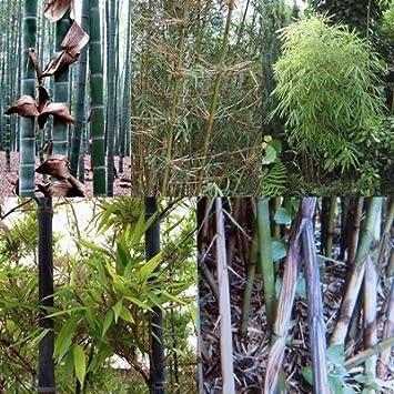 Bambus Mix Extremst Frosthart 19c Bis 25c 4 Arten Je 20