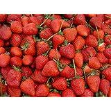 Erdbeeren 20++ Samen *Großfruchtig/Süß/Wohlschmeckend* -Super Ertrag und Winterhart-