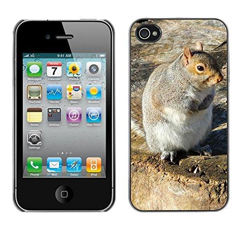 Premio Sottile Slim Cassa Custodia Case Cover Shell // F00008359 écureuil // Apple iPhone 4 4S 4G