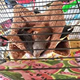 Oncpcare Pet Cage Hammock, Bunkbed Sugar Glider