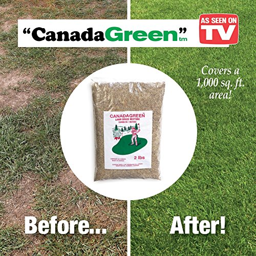 Canada Green Grass Seed - 2 Pound Bag ()