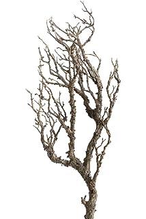 Korkenzieherweide Für Bodenvase Grüne Korkenzieherweide Deko äste
